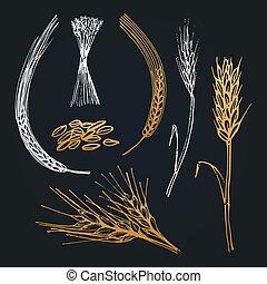 pointes, ferme, collection., main, seigle, illustrations, orge, vecteur, blé, icône, dessiné, logotype., brasserie, oreilles