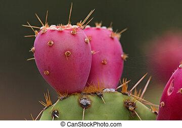 poire, fruit, cactus, épineux