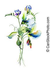 pois sucré, fleurs
