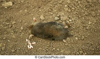 Poisoning by poison pellet rodenticides pesticide ...