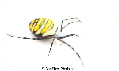 Poisonous animals. Beautiful striped spider. - Poisonous...