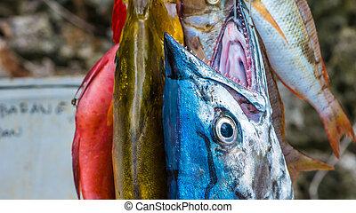 Images et photos de snaper 4 images et photographies for Acheter poisson rouge laval