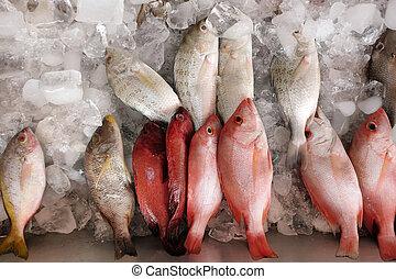 poisson frais, stockées, glace, assorti