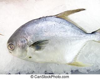 poisson frais, sur, glace, décoré, vendre, à, marché