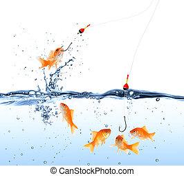 poisson rouge, appât, -, capture