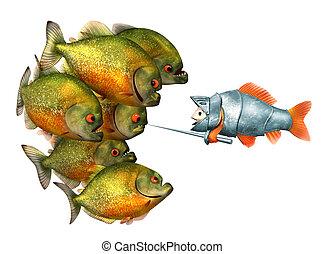 poisson rouge, chevalier, piranhas
