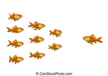 poisson rouge, diriger
