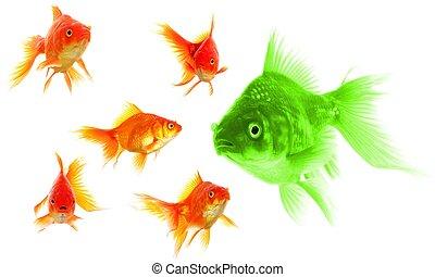 Poisson rouge individu motivation concept reussite for Tarif poisson rouge