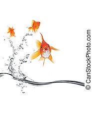 poisson rouge, loin, sauter