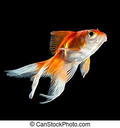 Images photographiques de poisson rouge 15 046 for Achat poisson rouge nice
