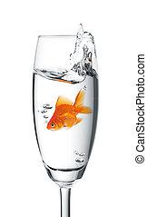poisson rouge, sauté, verre