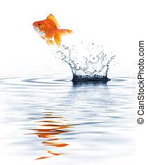 poisson rouge, sauter