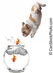 poisson rouge, suivre, fishbowl, sauter, chiot