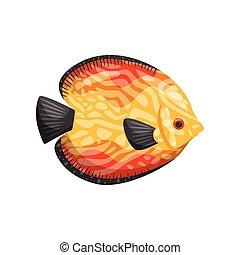 poisson tropical, eau, arrière-plan., life., blanc