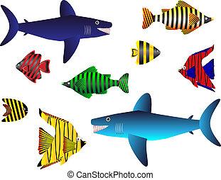 poisson tropical, ensemble, blanc