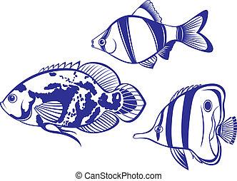poisson tropical