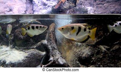 poisson tropical, vie sauvage