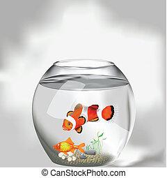 poissons, aquarium, deux