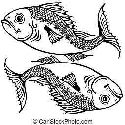 poissons, blanc, noir
