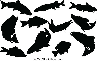 poissons, collection