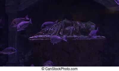 poissons, coloré, bleu, aquarium, profond, world., sombre, water., sous-marin