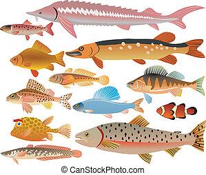poissons, ensemble