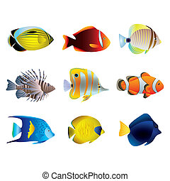 poissons tropicaux, vecteur, ensemble