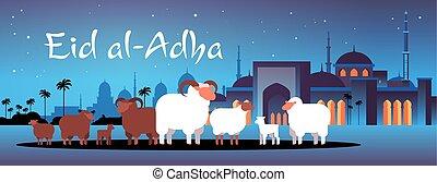 pojęcie, gromada, sheep, nabawi, mubarak, święto, meczet, ...
