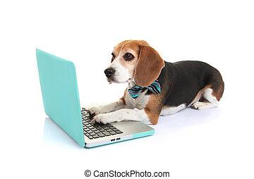 pojęcie, handlowy, pieszczoch, laptop, pies, komputer, używając