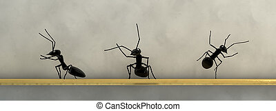 pojęcie, praca, mrówki, drużyna