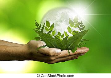pojem, ekologie