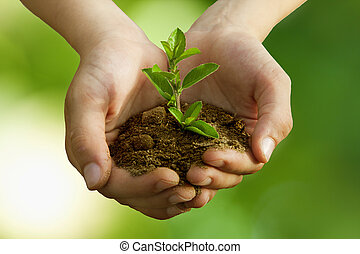 Pojke, konservering, träd, plantande, miljöbetingad