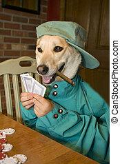 poker, chien, jouer