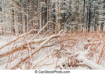 pokrytý, větvit, sněžit, les