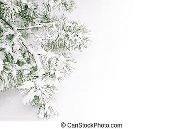 pokryty, śnieg, gałąź