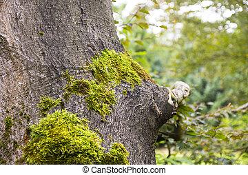 pokryty, drzewo, mech, pień