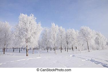pokryty, krajobraz, zima drzewa, śnieg