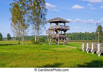 polônia, floresta, atalaia, bialowieza
