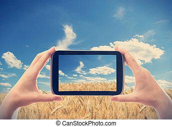 pola, pszenica, wziąć, fotografia