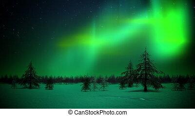 polaire, forêt, boucle, lumières