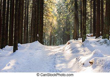 polana, tatras, inverno, polônia, rusinowa, alto, floresta