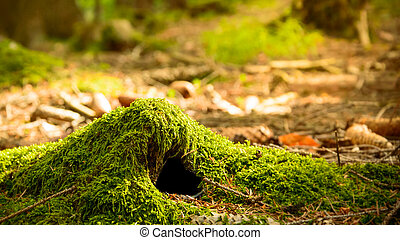 An animal burrow in the forest covered with moss, a warm sunny day.