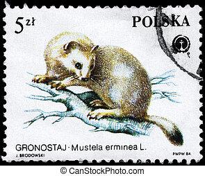 POLAND - CIRCA 1984 Stoat - POLAND - CIRCA 1984: A Stamp...