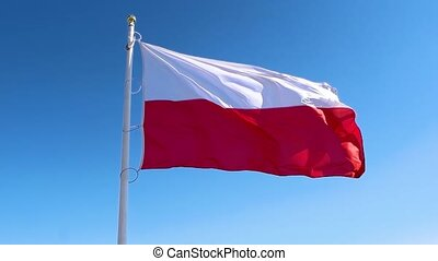 Poland flag waving in the wind