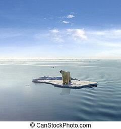 polar, último, urso