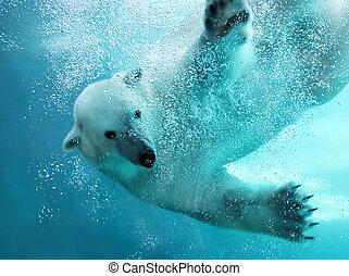 polar, angriff, bär, underwater
