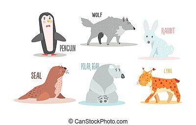 polar, animais, ártico, urso, pingüim, cobrança, selo, vetorial, ilustração, lynx, lobo, nomes, coelho