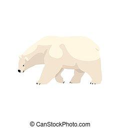 polar, animal, ártico, ilustração, vetorial, urso, fundo, branca
