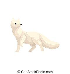 polar, animal, raposa ártica, ilustração, vetorial, fundo, branca