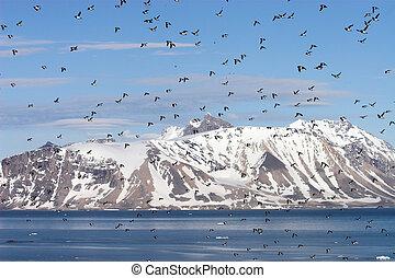 polar, arktisch, landschaftsbild, sommer
